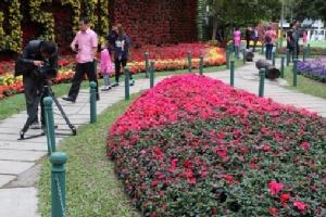 """เป็นล้านดอก..เริ่มแล้ว """"เชียงรายดอกไม้งาม"""" โชว์ไม้ดอกหายากยาวถึงสิ้นมกราคม 61"""