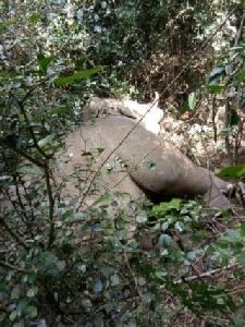 สลด! ช้างพลายงาคู่ตายไม่ทราบสาเหตุในป่าอุทยานกุยบุรี