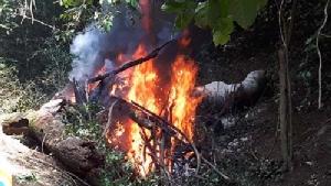 ไว้อาลัยช้างป่าพลายงางามกุยบุรี เผาแล้ววันนี้ หลังถูกสังหารด้วยไรเฟิล-ลูกซอง