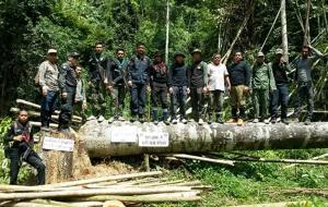 กลุ่มคนลักลอบตัดไม้ทำลายป่าสงวนฯ กาบังกว่า 20 ไร่ พบป่าถูกทำลายเป็นวงกว้าง