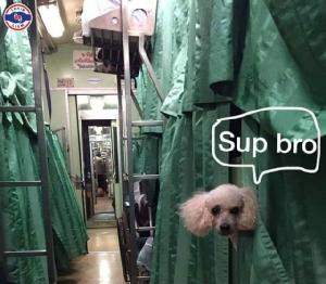 ชาวเน็ตถาม! สมควรไหม ปล่อยสุนัขนอนเตียงบนรถไฟ หวั่นเจอเห็บ-หมัด
