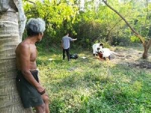 ปศุสัตว์ จ.ระยอง เร่งส่งหัววัวที่ถูกหมาบ้ากัดพิสูจน์ หลังตายด้วยอาการคล้ายติดเชื้อ