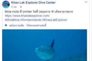 ฮือฮา!! พบปลาพระอาทิตย์หายากในหมู่เกาะสิมิลัน