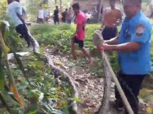 """ตะลึง! กู้ภัยนครฯ จับ """"งูเหลือมยักษ์"""" ตัวยาวกว่า 6 เมตร หลังพบซุกพงหญ้านาน 2 วัน"""