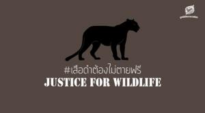 เสือดำต้องไม่ตายฟรี มูลนิธิสืบฯ ดันกม.เพิ่มโทษ /คนลงชื่อ change.org ใกล้ทะลุ 1.5 แสนรายชื่อ