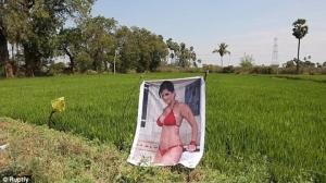 """ได้ผลซะด้วย! เกษตรกรอินเดียติดโปสเตอร์ """"ดาวโป๊"""" ป้องกันคนร้ายขโมยพืชผัก (ชมคลิป)"""