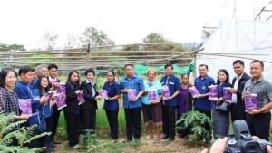 ชูกลุ่มเกษตรกรปลูกผักโพธิ์ศรีสำราญ ต้นแบบปลูกผักอินทรีย์ปลอดสารพิษ