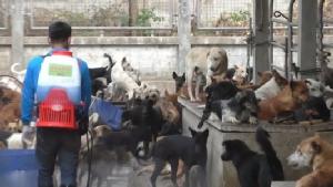 ด่านกักสัตว์นครพนมเร่งฉีดวัคซีนสกัดสุนัขบ้า หลังรับสุนัขกลุ่มเสี่ยง 3 พันตัวจากร้อยเอ็ดดูแล