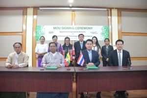 เมียนมาร์รับวิทยาการไทยปรับปรุงพันธุ์ข้าวสำเร็จ 3 พันธุ์