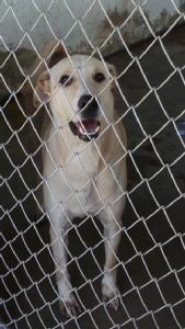 กรมปศุสัตว์เตรียมย้ายสุนัขในศูนย์รักษ์สุนัขหัวหิน 300 ตัว ไปศูนย์พักพิงบุรีรัมย์ เกินขีดความรับผิดชอบ