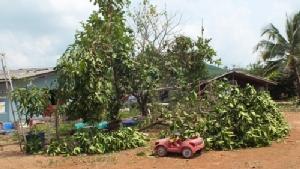 พายุฤดูร้อนพัดถล่มบ้านเรือน ปชช. และสวนผลไม้ใน จ.จันทบุรี เสียหายเป็นวงกว้าง
