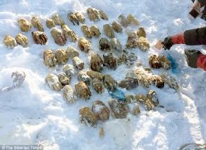 สยอง!!พบถุงบรรจุมือมนุษย์27คู่วางบนกองหิมะในไซบีเรีย ไม่รู้ว่าเป็นของใคร