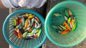 """เหยื่อตกปลา """"อ๊อด ลั่นทุ่ง"""" จากพ่อค้าข้าวแกง สานฝันสิ่งที่รัก รายได้หลักแสนต่อเดือน"""