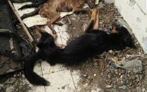 จ่อหมายเรียกสาวใหญ่ปล่อยสุนัขตาย เพื่อนบ้านผวา! ฉีดยาฆ่าเชื้อเจอกองทัพเห็บ-หมัดนับแสน