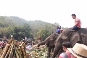 นักท่องเที่ยวไทย-เทศ แห่ร่วมงานวันช้างไทยคึกคัก ทั้งปางช้างรวมมิตร-บ้านปูเต้อ