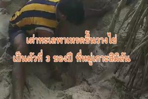 เต่าทะเลพาเหรดขึ้นวางไข่เป็นตัวที่ 3 ของปี ที่หมู่เกาะสิมิลัน
