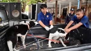 อุบลฯ พบการระบาดโรคพิษสุนัขบ้าอีก 2 จุด ปศุสัตว์ประกาศเป็นเขตโรคระบาดแล้ว