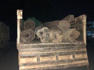 ขบวนการไม้เถื่อนขนท่อนซุงลงเรือน้ำโขงส่งจีนโจ๋งครึ่ม เหมือนยิ่งจับยิ่งขน-ค่าผ่านทางสะพัด
