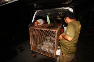 ยายหวั่นทำผิด กม.กรมป่าไม้ จับลิงแสมได้แจ้งกู้ภัยช่วยนำไปปล่อยคืนป่าธรรมชาติ