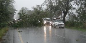 พายุฤดูร้อนถล่มเมืองแปดริ้ว ทำต้นพญาเสือโคร่งขนาดใหญ่ล้มขวางถนน