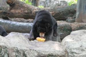 สวนสัตว์ดุสิต จัดผลไม้แช่แข็งคลายร้อน พร้อมดูแลสัตว์อย่างใกล้ชิด