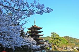 """ปั่นเที่ยว""""ยามากุจิ""""เปิดมุมมองใหม่ในญี่ปุ่น...กินโซบะย่างกระเบื้องหลังคา ตื่นตาสะพานวิวสวยต้องชมก่อนตาย/ปิ่น บุตรี"""