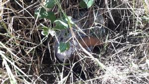 พบศพชายนอนตายปริศนาในป่าเมืองชะอำ