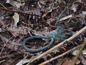 สลดใจ! นักเดินป่าพบซากสมเสร็จถูกฆ่าชำแหละบนเทือกเขาบรรทัด