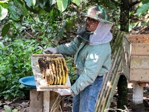 เกษตรกรตำบลปริกเลี้ยงผึ้งให้ผลิตน้ำผึ้งแท้ 100 เปอร์เซ็นต์ สร้างรายได้ดีตลอดปี