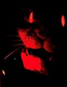 มายาปีศาจ ตอนที่ 4 แมวแดง