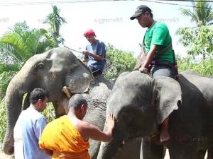 เจ้าของช้างรายใหญ่ของตรังทำพิธีรับขวัญช้างประจำปี