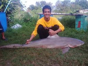 ตะลึง! ชาวประมงเขาเต่าโชว์ภาพฉลามหัวบาตรตัวใหญ่ติดอวน-ดีเดย์พรุ่งนี้วางทุ่นไข่ปลาที่หาดทรายน้อย