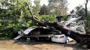 พายุฤดูร้อนโค่นต้นไม้ใหญ่ที่ว่าการ อ.แม่ริม ทับโรงจอดพังยับรถเสียหายหลายคัน