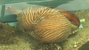 สถาบันวิจัยทรัพยากรทางน้ำฯ เปิดโซนจัดแสดงสัตว์น้ำ ที่เกาะสีชัง