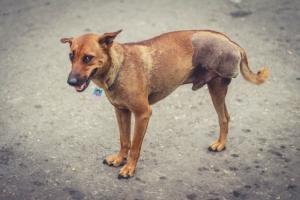 คนรักหมาตัวอย่าง! ติดล็อกเกตห้อยคอสุนัขจรจัด ลั่นทำใครเดือดร้อนพร้อมรับผิดชอบ