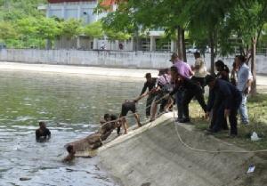 นาทีชีวิต! ชาวบ้านช่วยกวางป่าพลัดตกสระน้ำ มทร.รัตนโกสินทร์ หัวหิน รอดตายหวุดหวิด