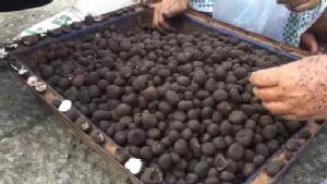 """มาแล้ว! """"เห็ดถอบ"""" เมนูเด็ดอาหารป่าช่วงหน้าฝน ชาวบ้านแห่เก็บวางขายกิโลละกว่า 500 บ."""