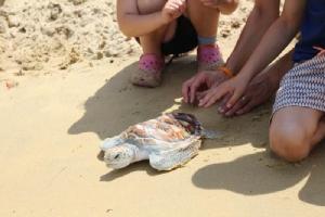 เครือโรงแรมอนันตราจัดกิจกรรมปล่อยลูกเต่าคืนสู่ท้องทะเล