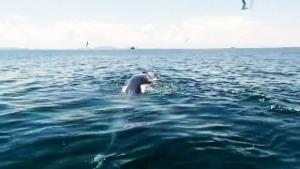 ฮือฮา ! วาฬบรูด้าแม่ลูก ยักษ์ใหญ่ใจดีแห่งทะเลชุมพร โผล่อวดโฉมให้นักท่องเที่ยวได้ชม