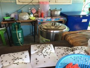 มาเป็นกองทัพ! แมลงวันบุก คนเชียงใหม่ต้องกางมุ้งกินข้าว ชาวอุทัยดักจับกันทุกวัน