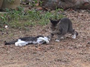 ภาพสุดสะเทือนใจ แม่แมวพยายามช่วยชีวิตลูกหลังถูกรถชนตาย