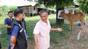 สัปดาห์เดียววัวที่ อ.เปือยน้อยตายพิษหมาบ้าแล้ว 4 ตัว ระดมฉีดวัคซีนสัตว์สี่ขาทั้งหมู่บ้าน