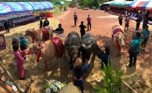 หนองคายส่งเสริมคนรุ่นใหม่รู้จักควาย จัดงานวันอนุรักษ์ควายไทย