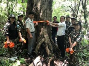 บวชต้นไม้ 89 ต้น อนุรักษ์ป่าไม้และสืบสานประเพณีฟังธรรมขุนห้วย