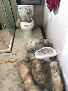เตือนภัย! น้ำพุให้น้ำสัตว์เลี้ยงไร้มาตรฐาน ไฟไหม้บ้าน น้องแมวหนีตายวุ่น