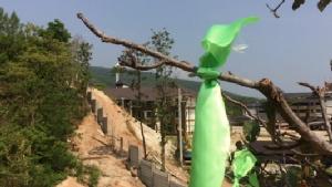"""คนเชียงใหม่เตรียมปักธงเขียวผืนใหญ่จุดสำคัญทั่วเมือง 21 พ.ค. 61 ประกาศเกาะติดจนกว่าจะรื้อ """"บ้านป่าแหว่ง"""""""