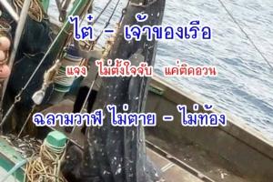 ไต๋ – เจ้าของเรือ แจงไม่ตั้งใจจับฉลามวาฬขึ้นเรือแต่ติดอวนขึ้นมา ยันไม่ตาย ไม่ท้อง(ชมคลิป)