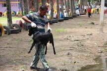ปศุสัตว์ชลบุรีส่ง จนท.จับสุนัขจรจัดใน ร.ร.ชุมชนหนองตำลึง หลังกัดเด็กหญิงวัย 9 ปี เจ็บ