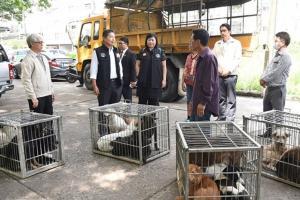 กทม.ย้ายสุนัขจรจัดซอยชินเขต 2 กว่า 80 ตัวไปศูนย์พักพิง จ.อุทัยธานี