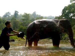 """ปางช้างแม่แตงเปิดโปรแกรมทัวร์ """"ฮักช้าง"""" นำนักท่องเที่ยวเลี้ยง-กอดช้างใกล้ชิด"""